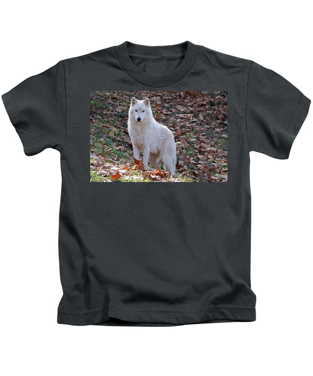 Wolf Kids T-Shirt featuring the photograph Wolf In Autumn by Sandy Keeton