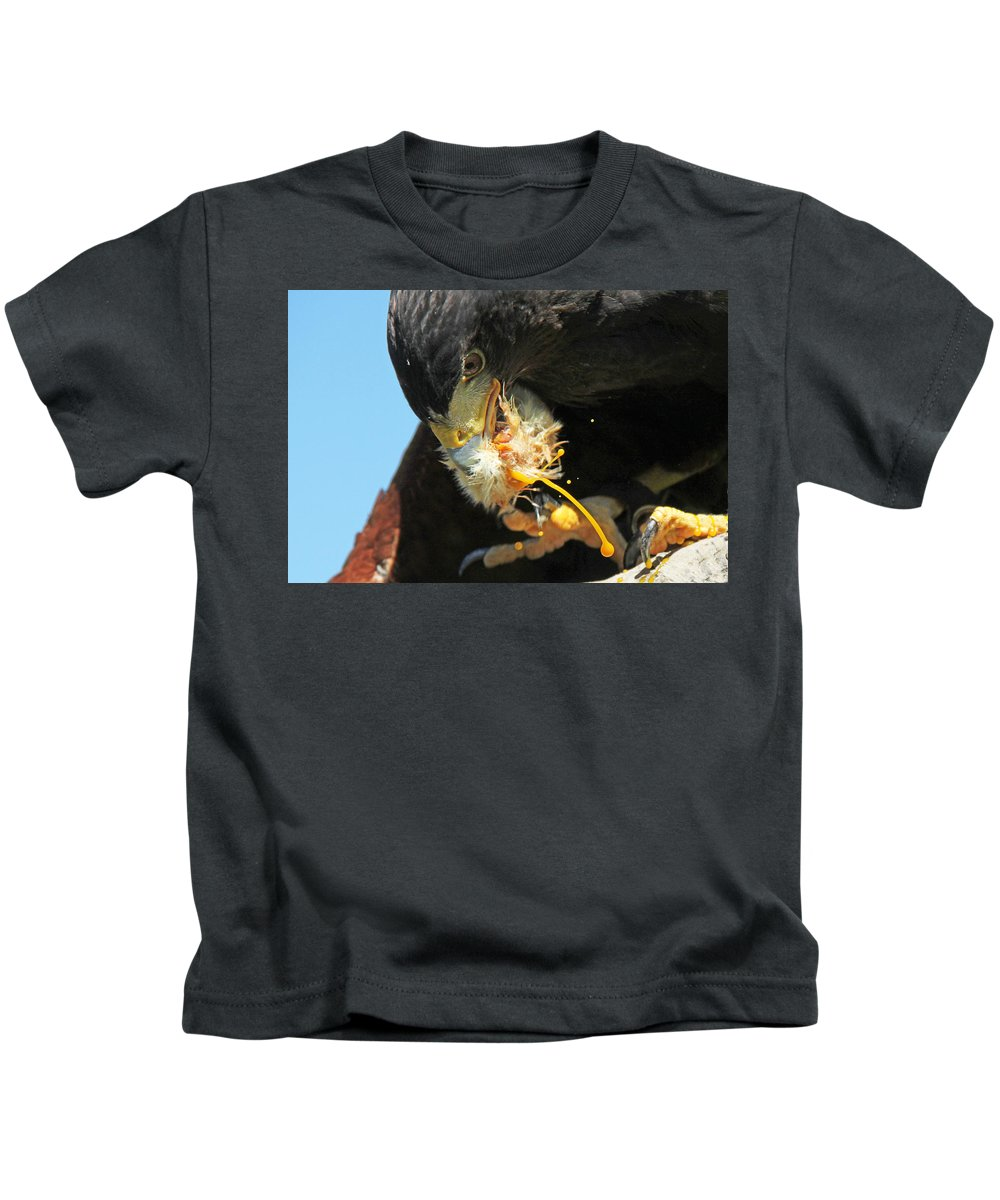 Harris Hawk Kids T-Shirt featuring the photograph Harris Hawk Feeding by James Hill