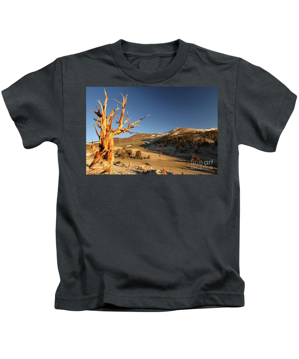 Bristlecone Pine Tree Kids T-Shirt featuring the photograph Ancient by Adam Jewell