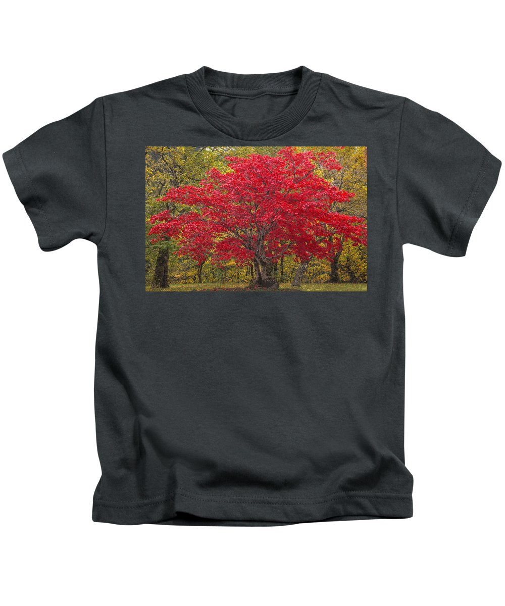 Abundance Kids T-Shirt featuring the photograph Autumn Flame by Eggers Photography