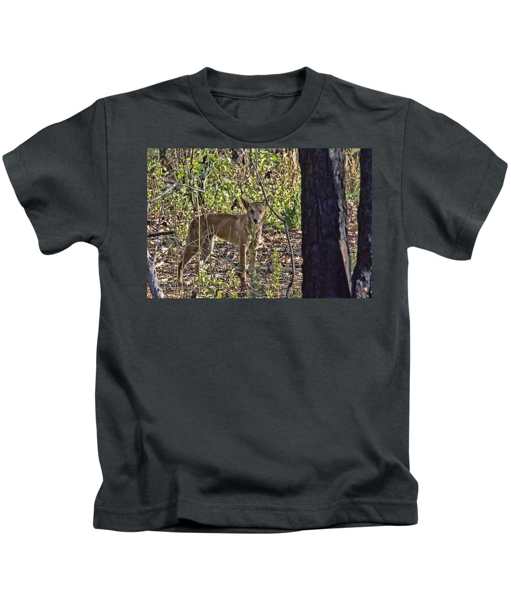 Dingo Kids T-Shirt featuring the photograph Dingo In The Wild V3 by Douglas Barnard