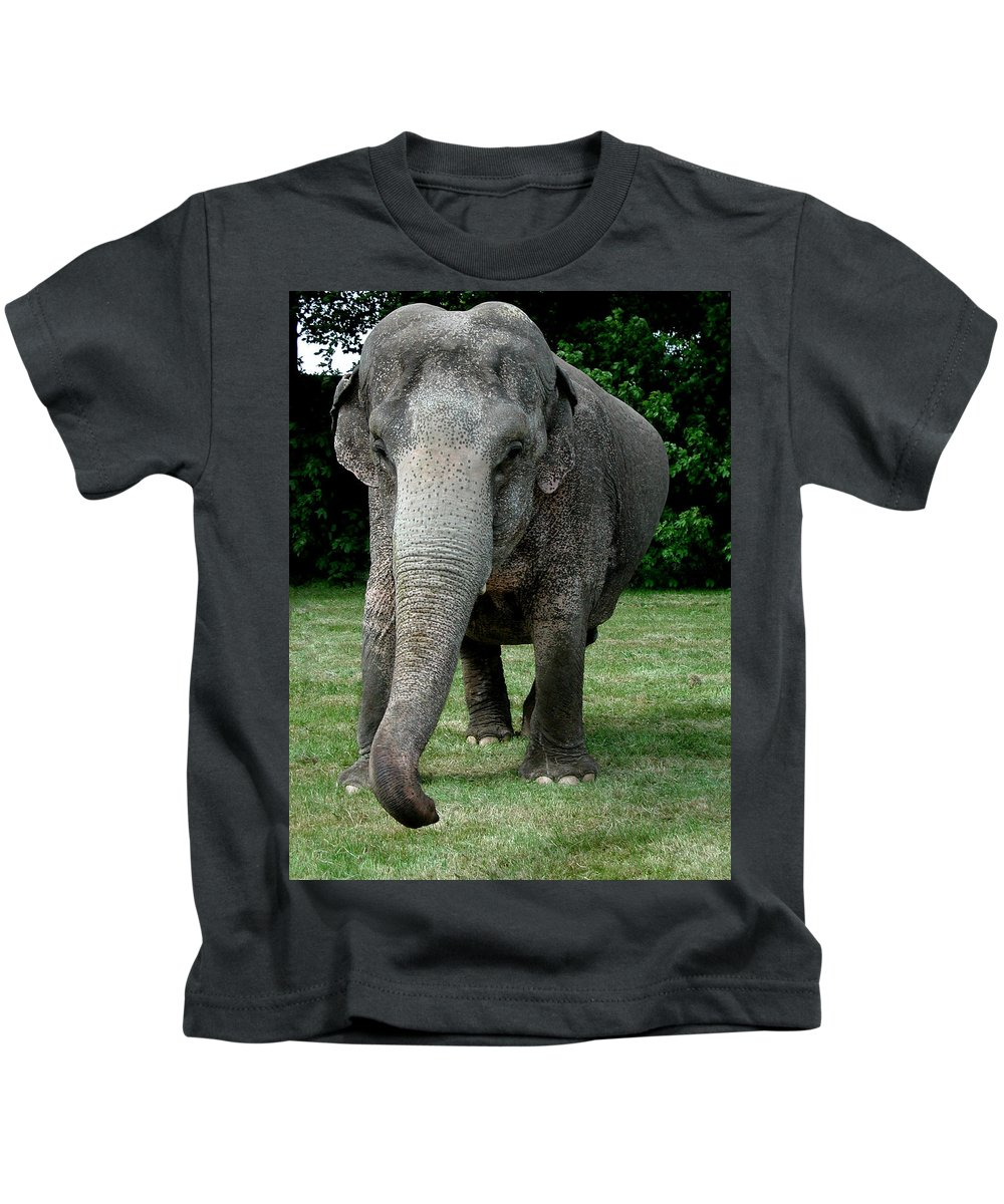 Colette Kids T-Shirt featuring the photograph Elephant Greet by Colette V Hera Guggenheim