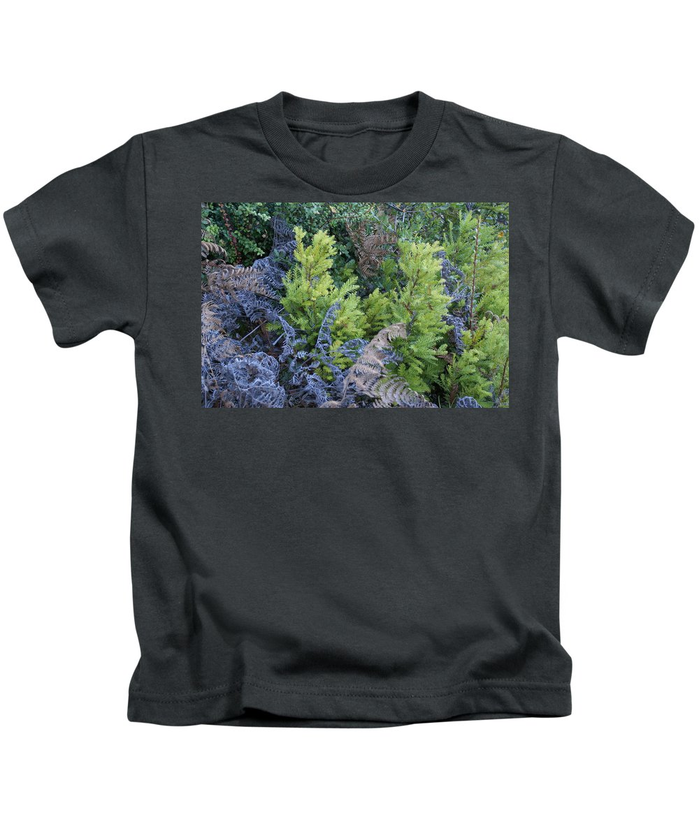 Redwood Trees Kids T-Shirt featuring the photograph Fresh Young Redwoods On Mt Tamalpais by Ben Upham III