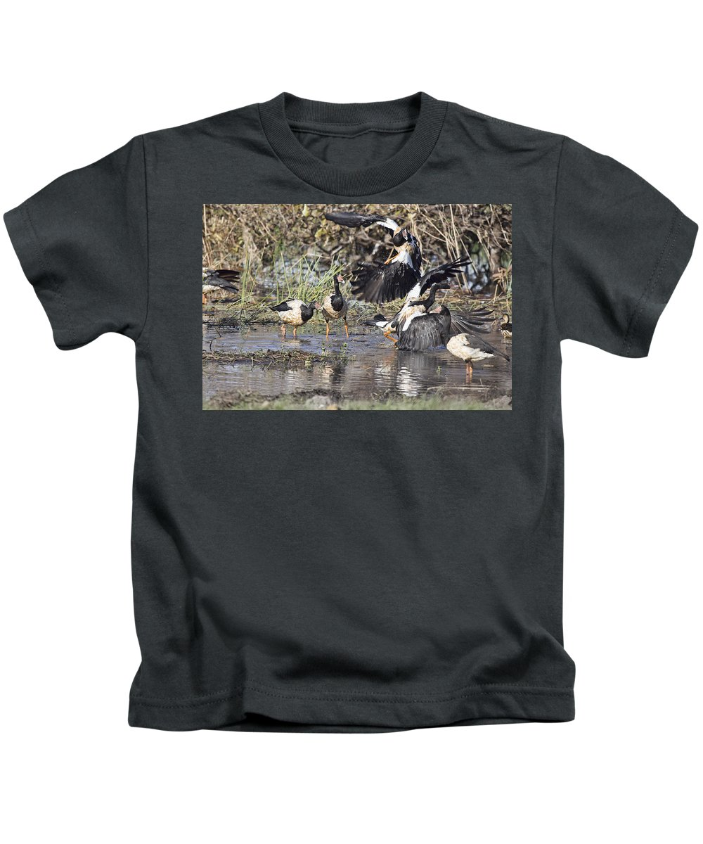 Goose Kids T-Shirt featuring the photograph Goose Fight by Douglas Barnard