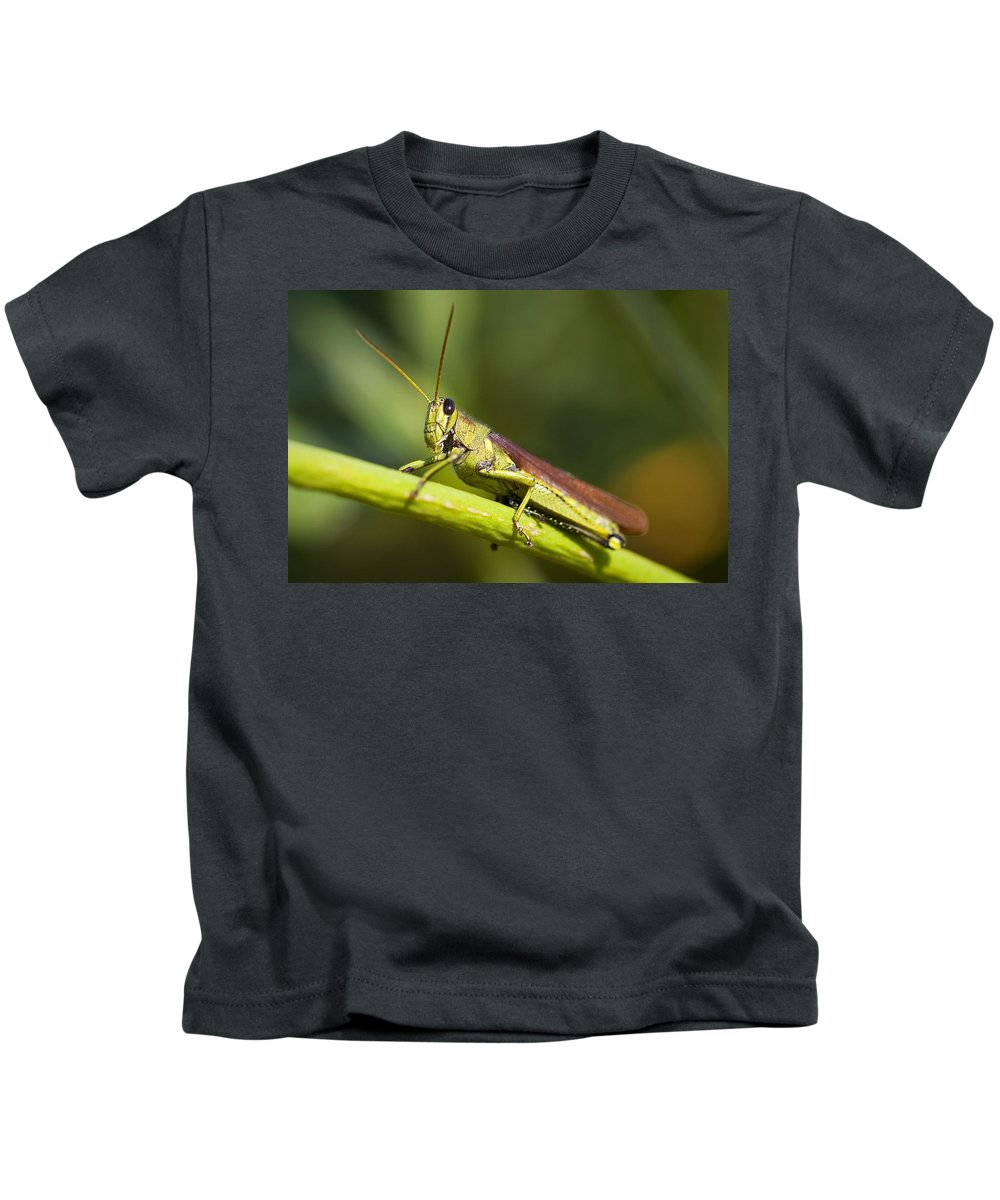 Grasshopper Kids T-Shirt featuring the photograph Grasshopper by Amy Jackson