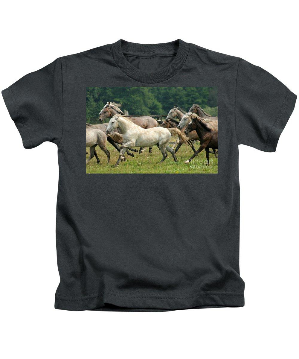 Lippizzan Horses Kids T-Shirt featuring the photograph Lipizzan Horses by Angel Ciesniarska