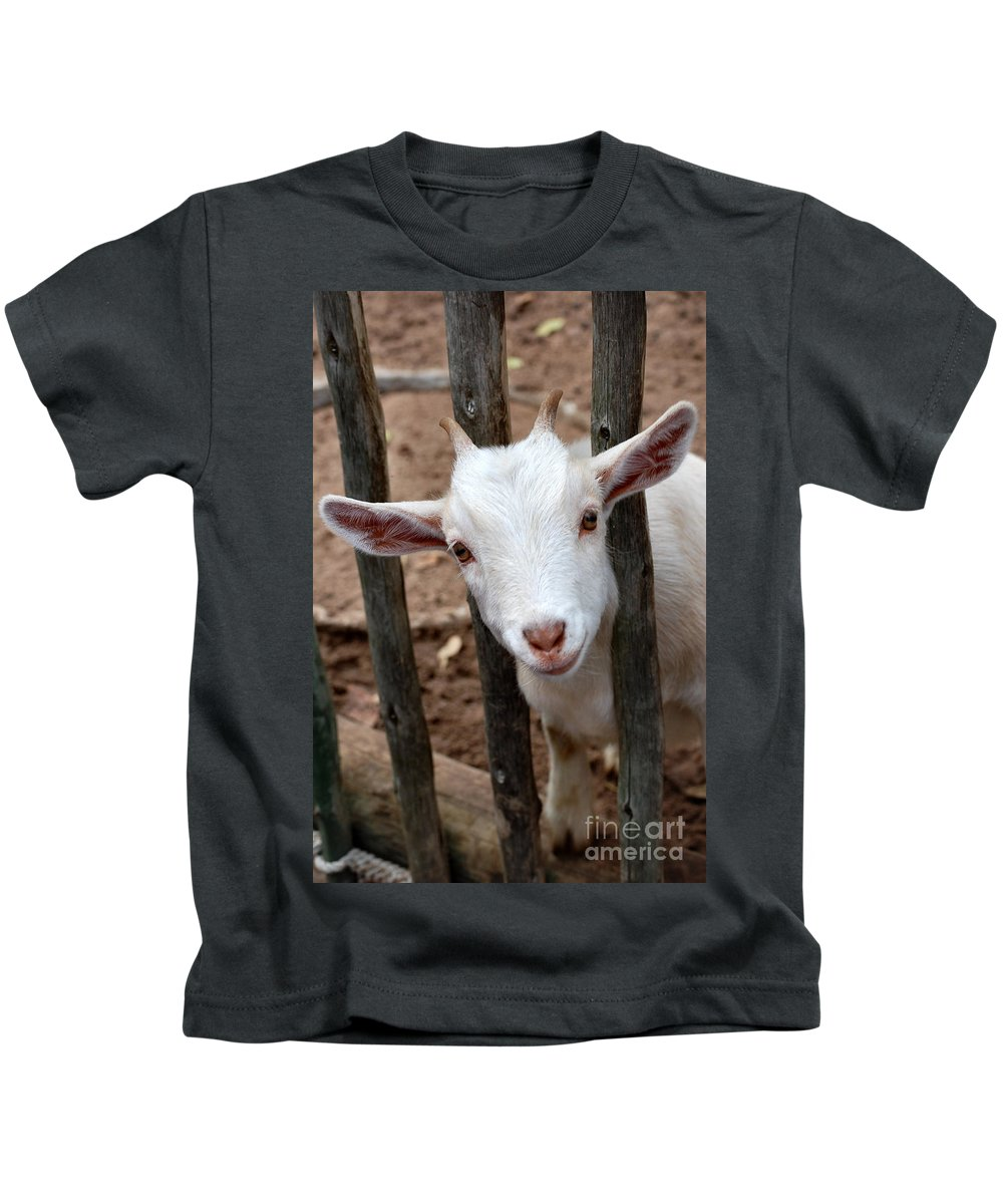 Goat Kids T-Shirt featuring the photograph Little Billy by Anjanette Douglas