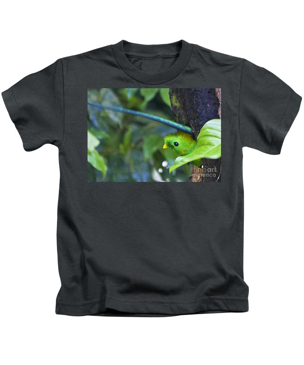 Bird Kids T-Shirt featuring the photograph Male Quetzal Working On Nest Hole by Heiko Koehrer-Wagner