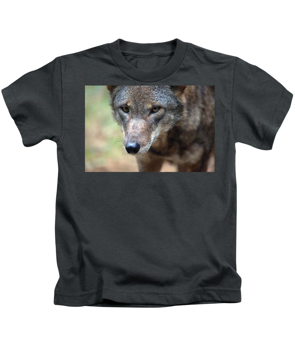 Wolf Kids T-Shirt featuring the photograph Red Wolf Closeup by Karol Livote