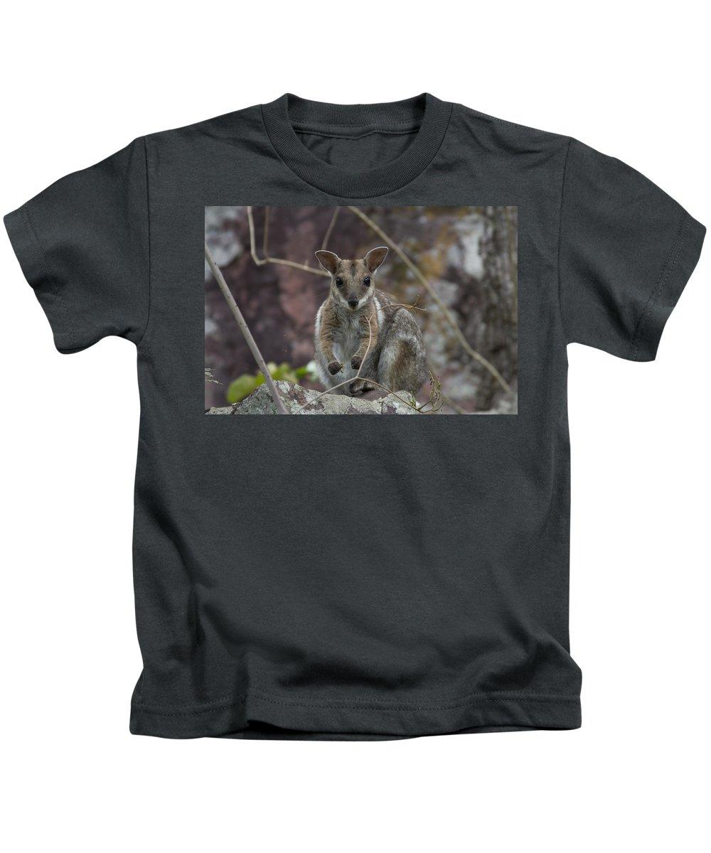 Rock Wallaby Kids T-Shirt featuring the photograph Rock Wallaby V2 by Douglas Barnard