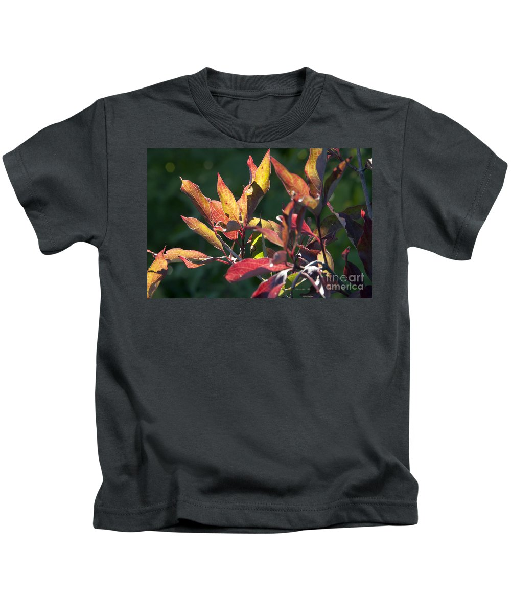 Leaves Kids T-Shirt featuring the photograph Sunlit Leaves by Darleen Stry