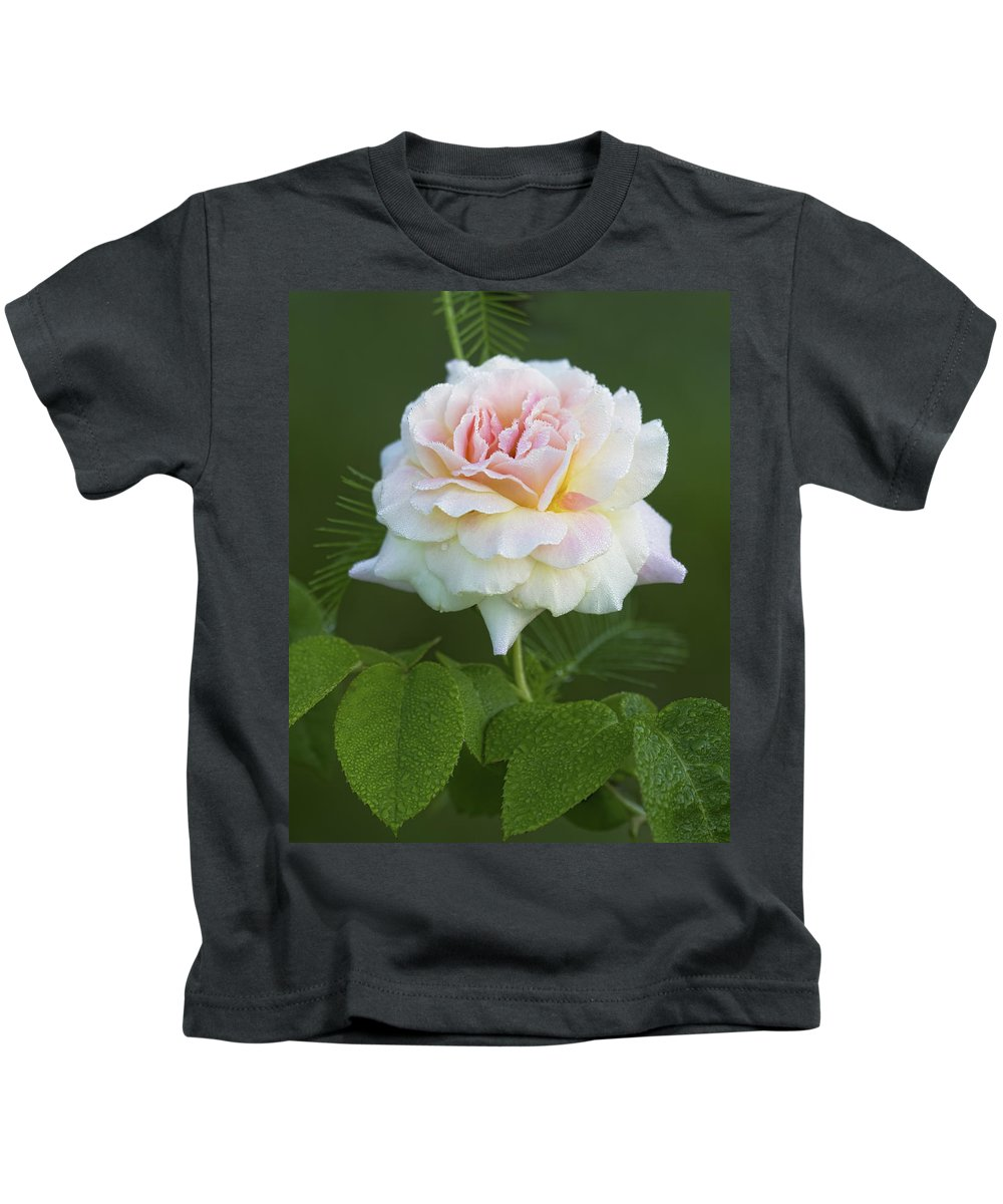 Peace Kids T-Shirt featuring the photograph Sweet Morning Peace Rose by Kathy Clark