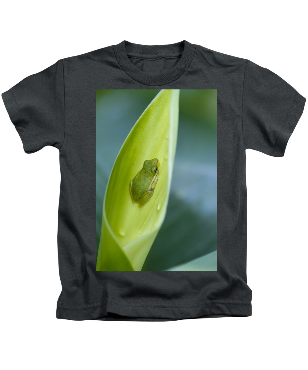 Tree Frog Kids T-Shirt featuring the photograph Tiny Tree Frog Cradle by Kathy Clark