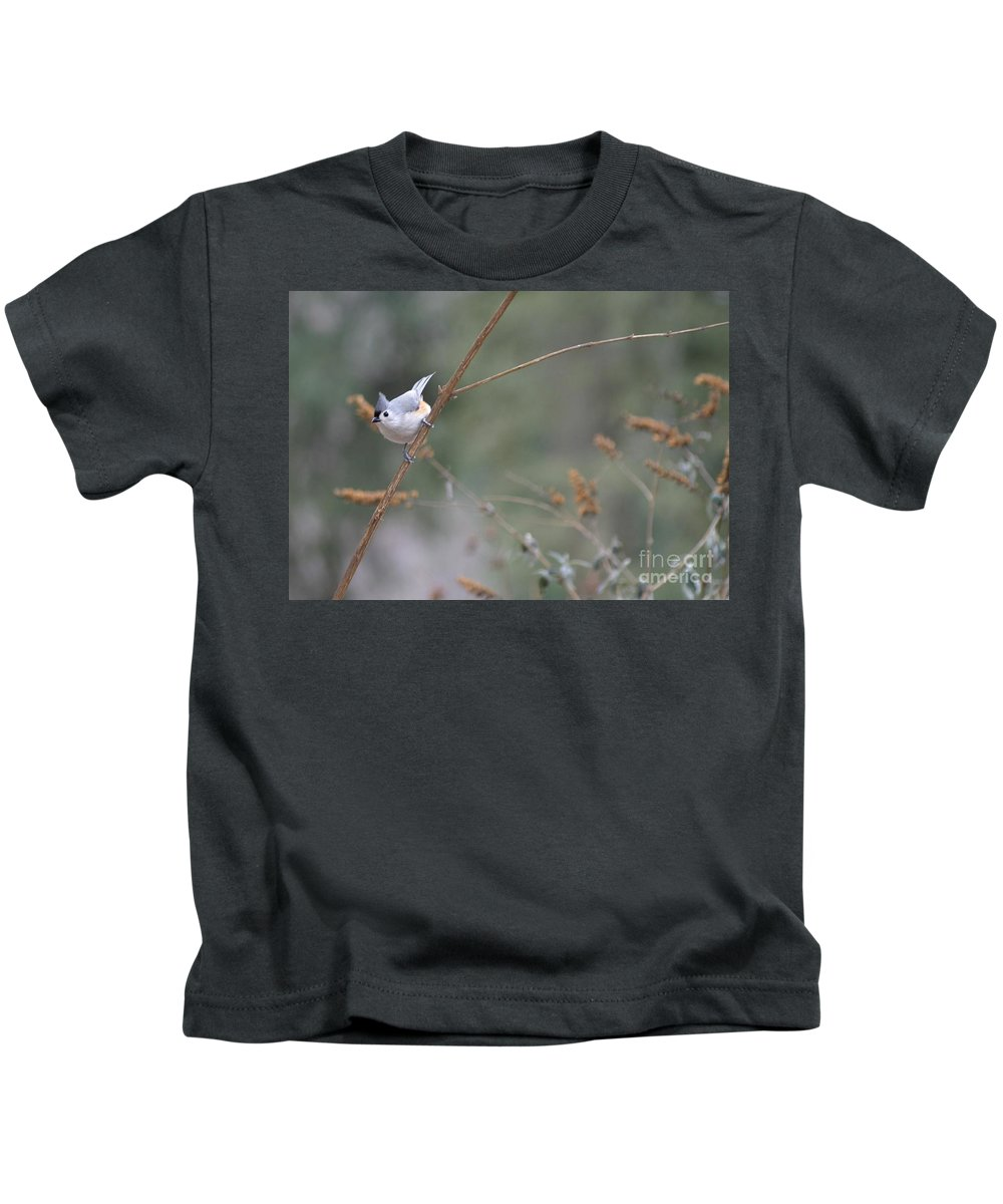 Birds Kids T-Shirt featuring the photograph Tufted Titmouse 2 by Living Color Photography Lorraine Lynch