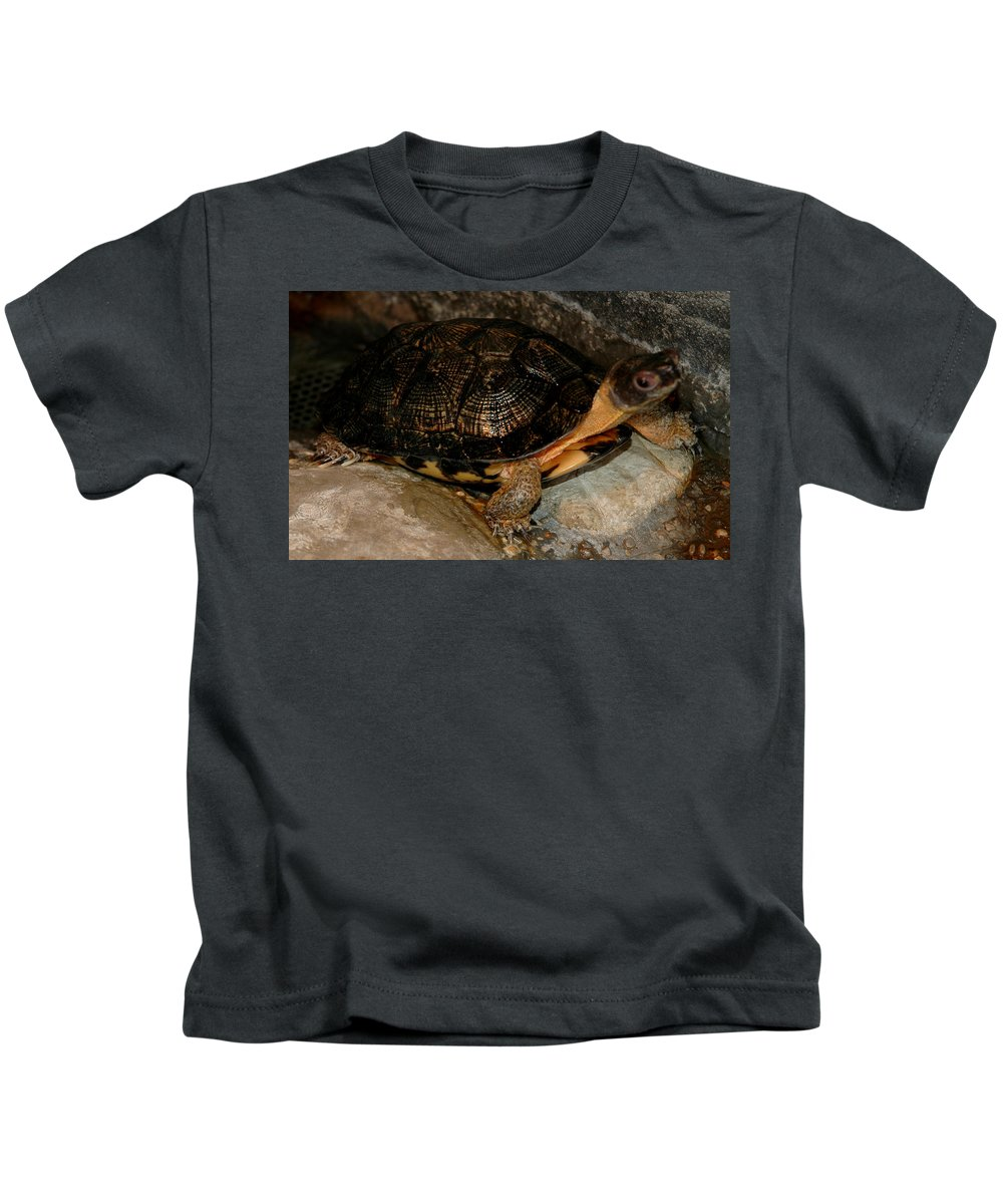 Usa Kids T-Shirt featuring the photograph Turtle Time On The Rocks by LeeAnn McLaneGoetz McLaneGoetzStudioLLCcom