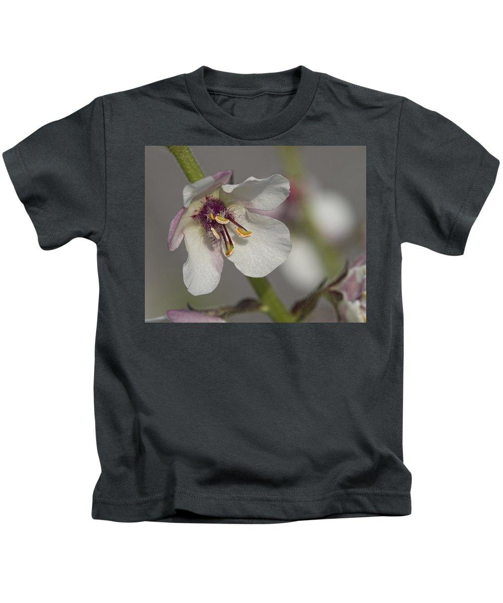 White Mullein Kids T-Shirt featuring the photograph White Mullein - Verbascum Lychnitis Wildflower by Kathy Clark