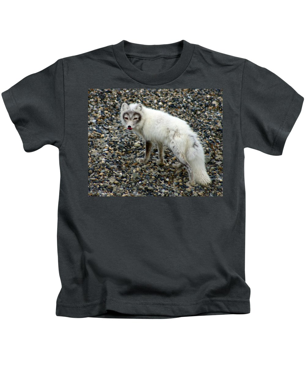 Arctic Fox Kids T-Shirt featuring the photograph Arctic Fox by Anthony Jones