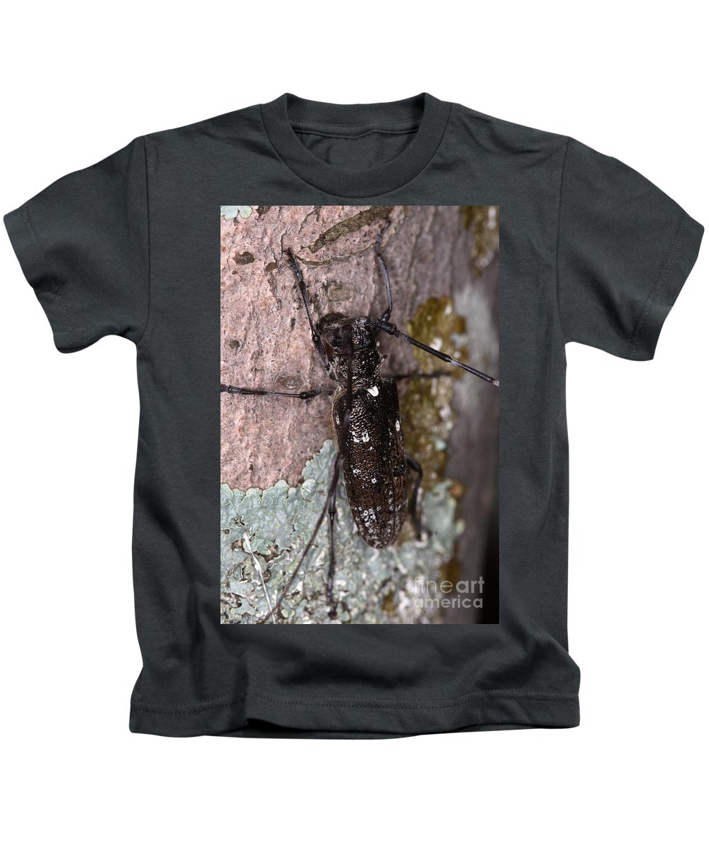 Trees Kids T-Shirt featuring the photograph Asian Long-horned Beetle by Ted Kinsman
