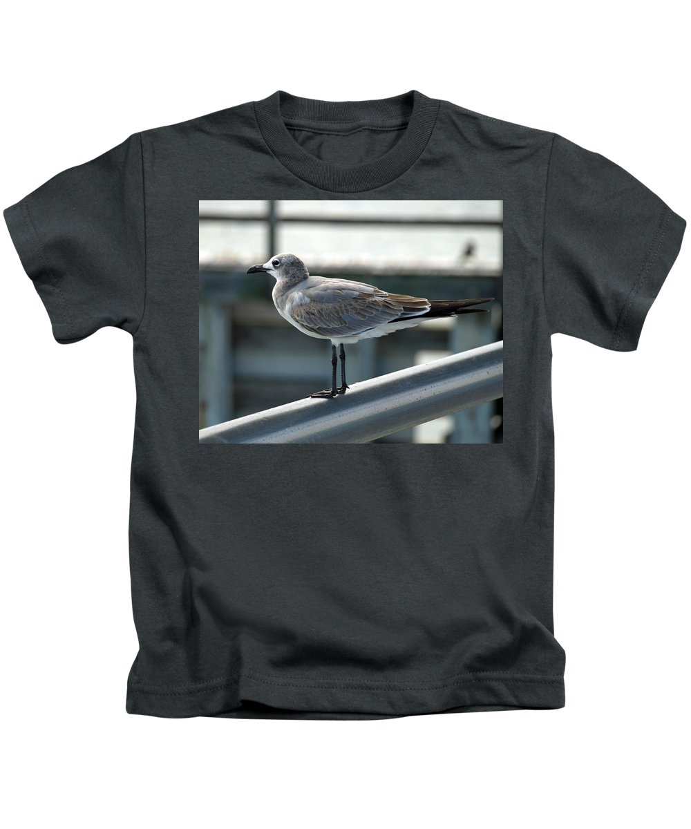 Laughing; Gull; Seagull; Bird; Waterfowl; Seashore; Sebastian; Inlet; Flying; Florida; Larus; Atrici Kids T-Shirt featuring the photograph Laughing Gull by Allan Hughes
