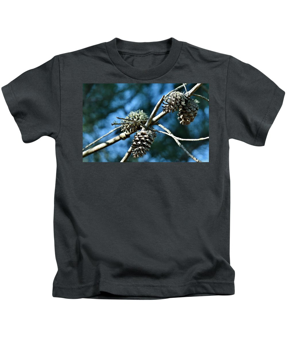 Close Up; Pine Cones; Dry Branch; Brown; Blue; Sky; Tree; Pine; Background; Decorative; Kids T-Shirt featuring the photograph Pine Cones On Dry Branch by Werner Lehmann