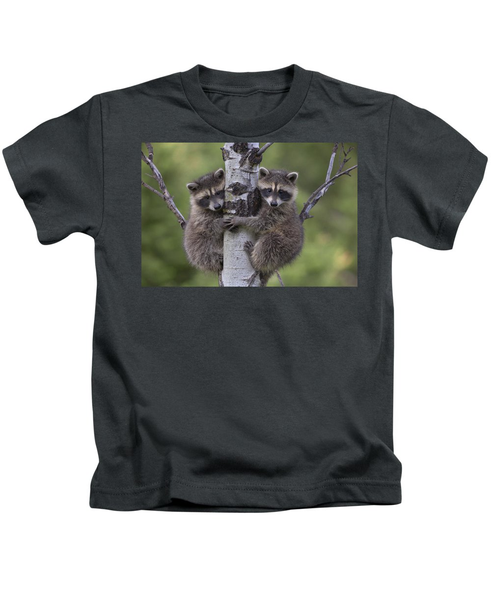 00176520 Kids T-Shirt featuring the photograph Raccoon Two Babies Climbing Tree North by Tim Fitzharris