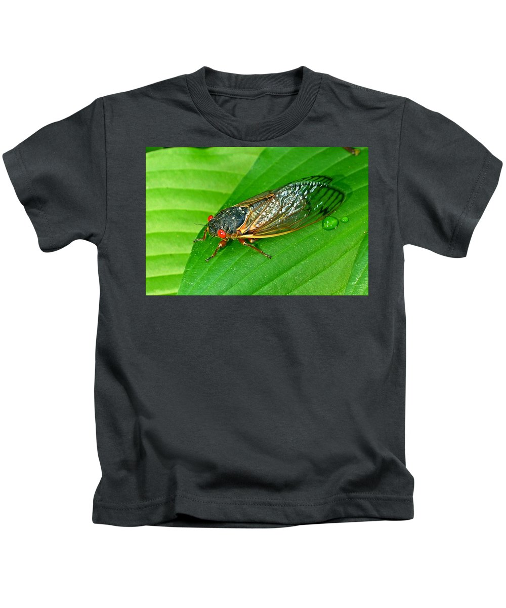 17 Kids T-Shirt featuring the photograph 17 Year Periodical Cicada by Douglas Barnett