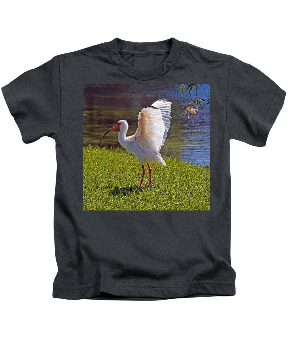 Ibis; White; Bird; Florida; Frog; Pollywogs; Pond; Seabird; Shore; Coast; Water; Fowl; Waterfowl; Fe Kids T-Shirt featuring the photograph White Ibis by Allan Hughes