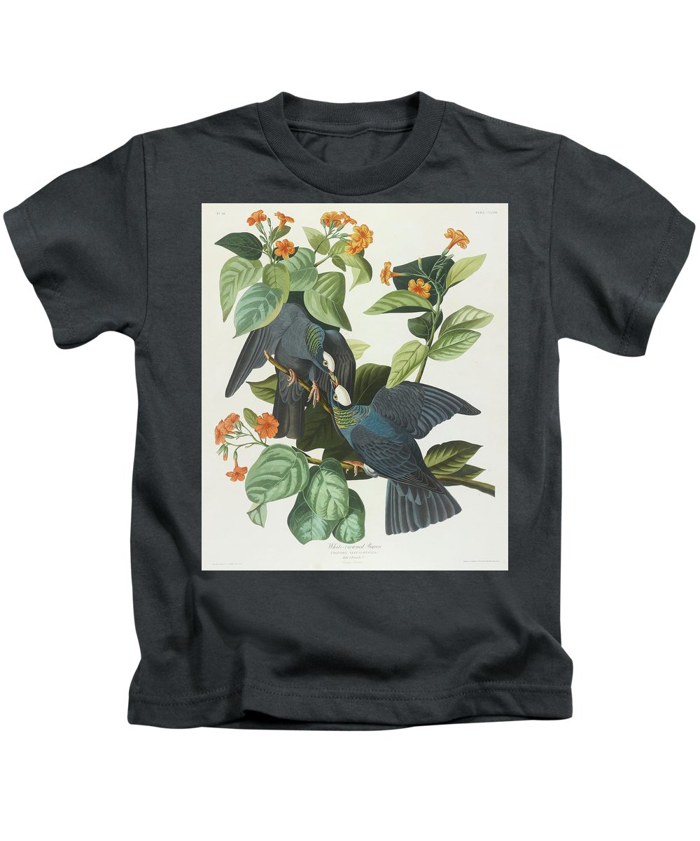 John James Audubon (after) White-crowned Pigeon (plate Clxxvii) Kids T-Shirt featuring the painting Crowned Pigeon by John James