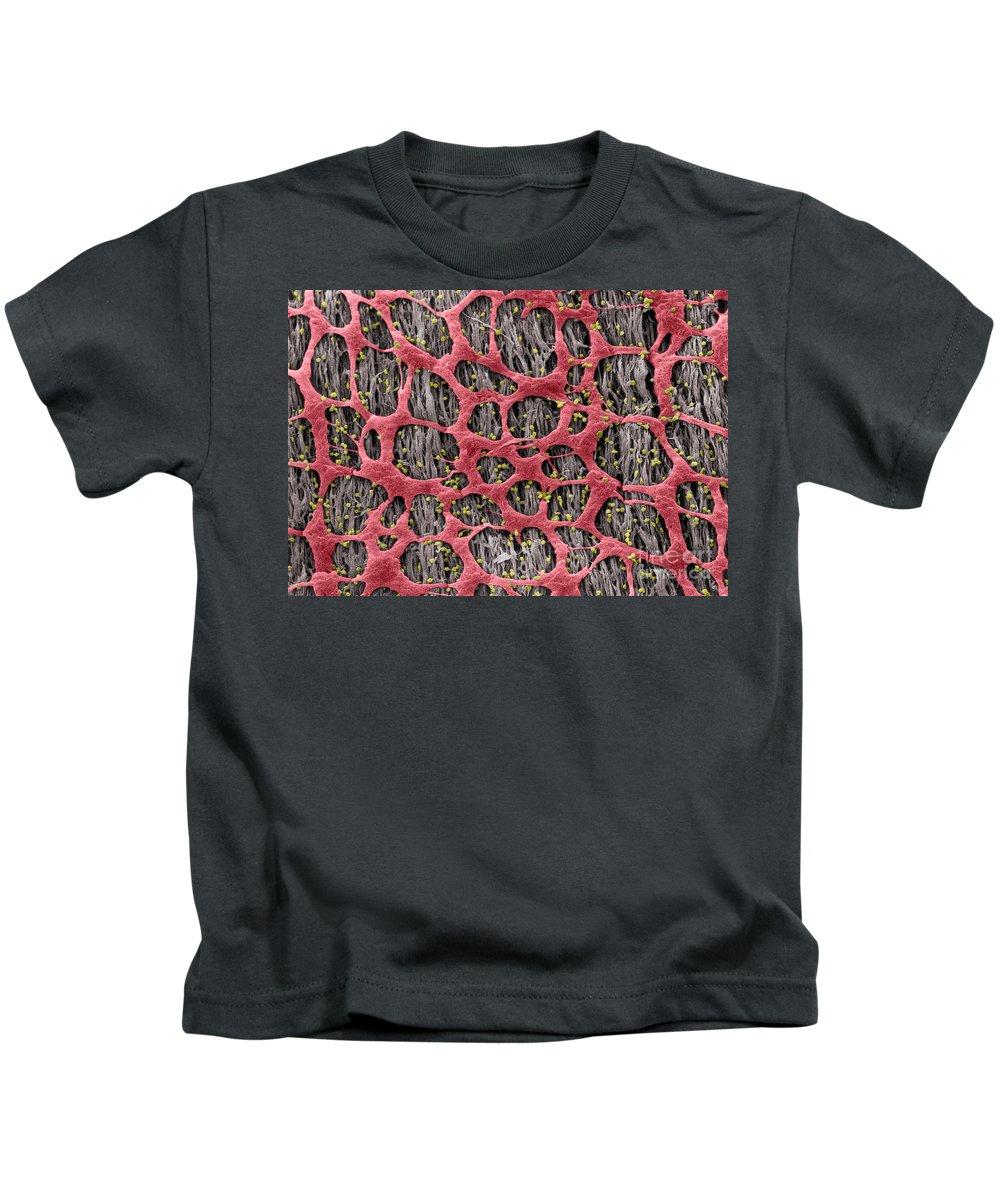 Science Kids T-Shirt featuring the photograph Myenteric Plexus, Sem by Don W. Fawcett