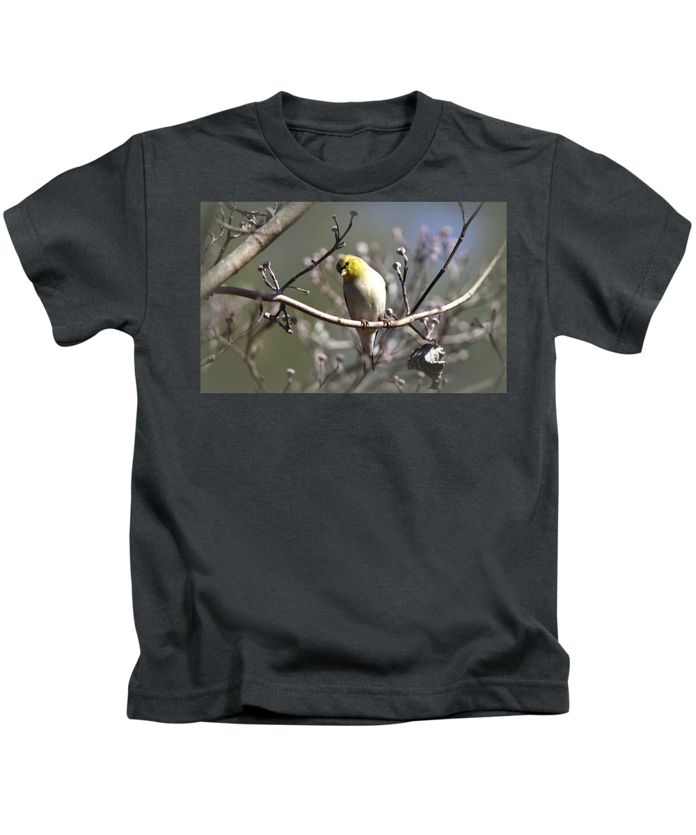 American Goldfinch Kids T-Shirt featuring the photograph Img_0001 - American Goldfinch by Travis Truelove