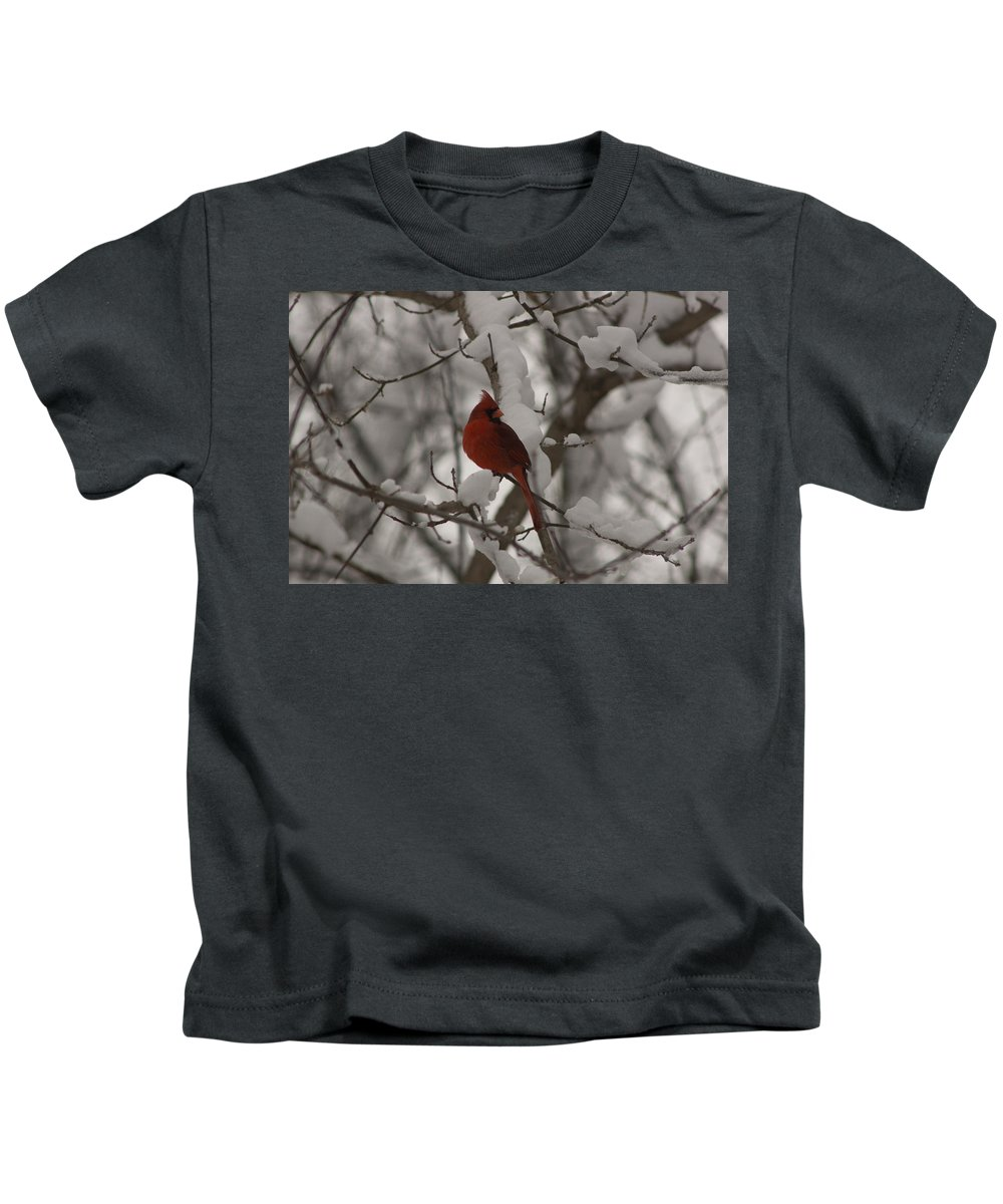 Aves Kids T-Shirt featuring the photograph Male Cardinal by Craig Hosterman