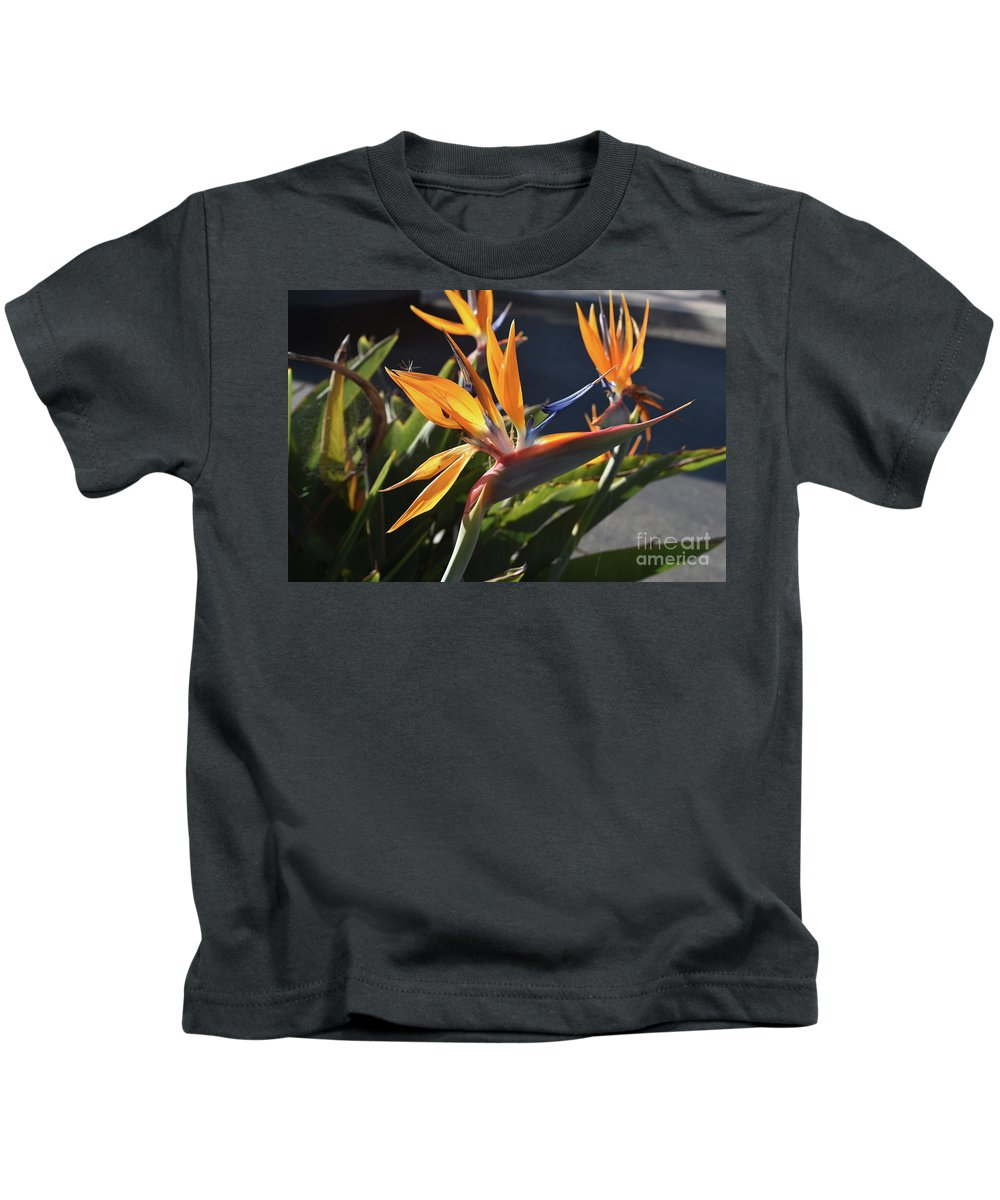 Bird-of-paradise Kids T-Shirt featuring the photograph A Bunch Of Bird Of Paradise Flowers Bloomed by DejaVu Designs