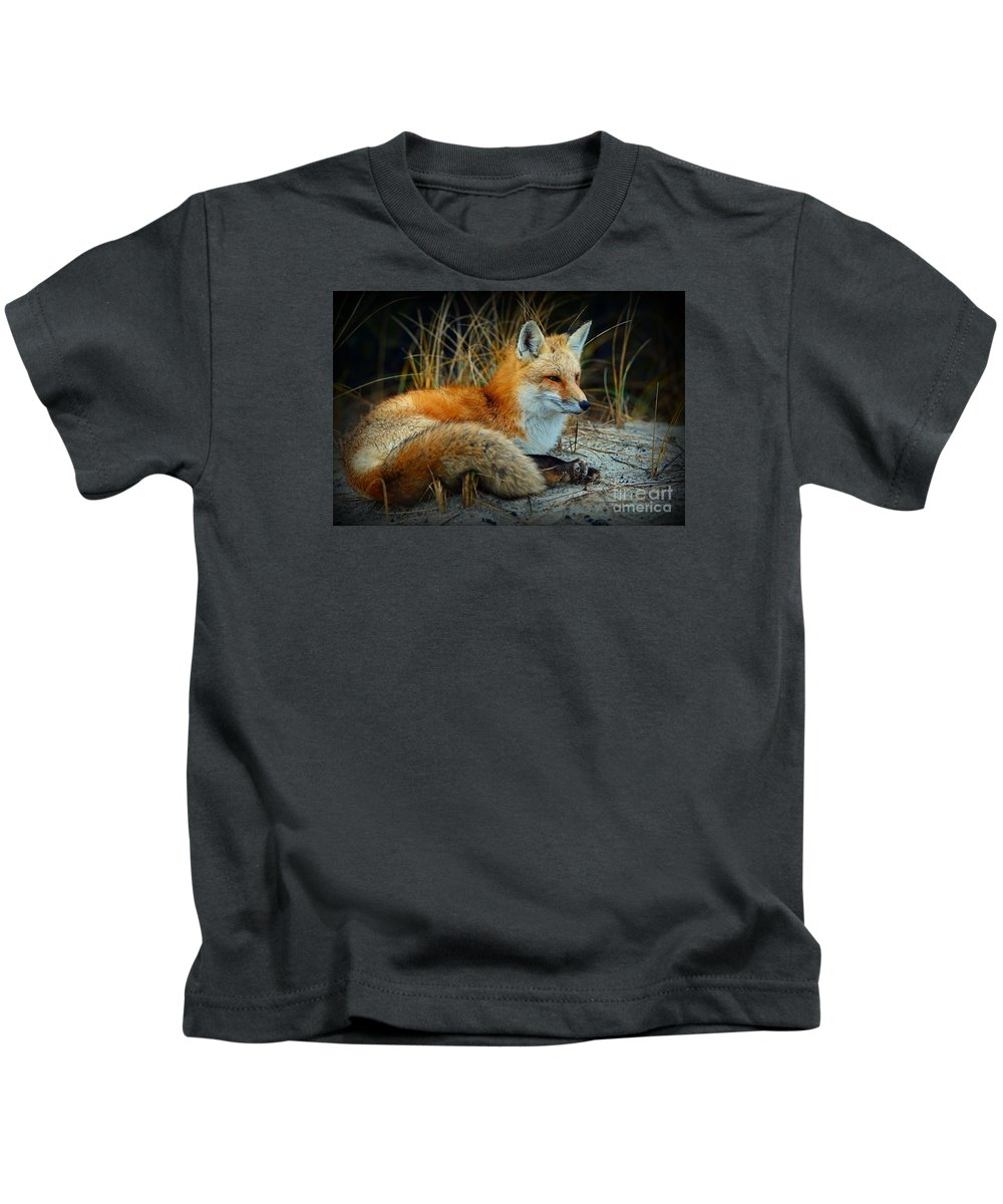 Paul Ward Kids T-Shirt featuring the photograph Animal - The Alert Fox by Paul Ward