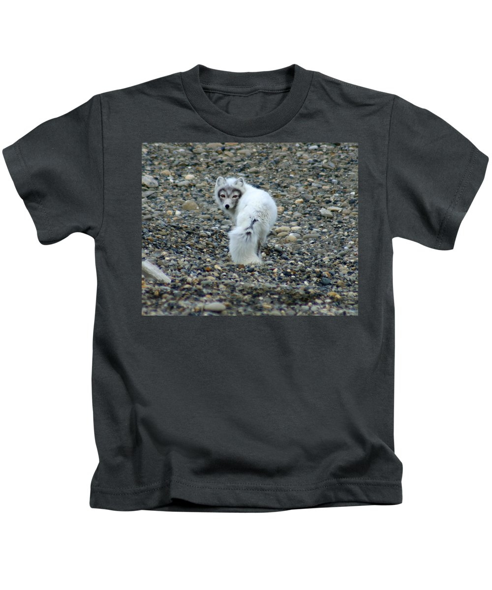 Alaska Kids T-Shirt featuring the photograph Arctic Fox by Anthony Jones