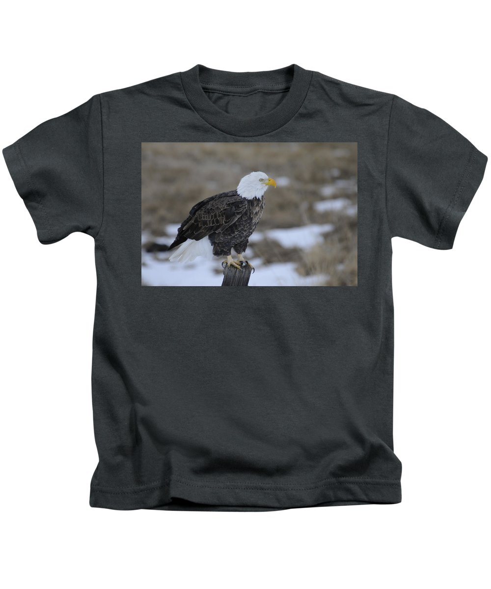 Bald Eagle Kids T-Shirt featuring the photograph Bald Eagle by Gary Beeler