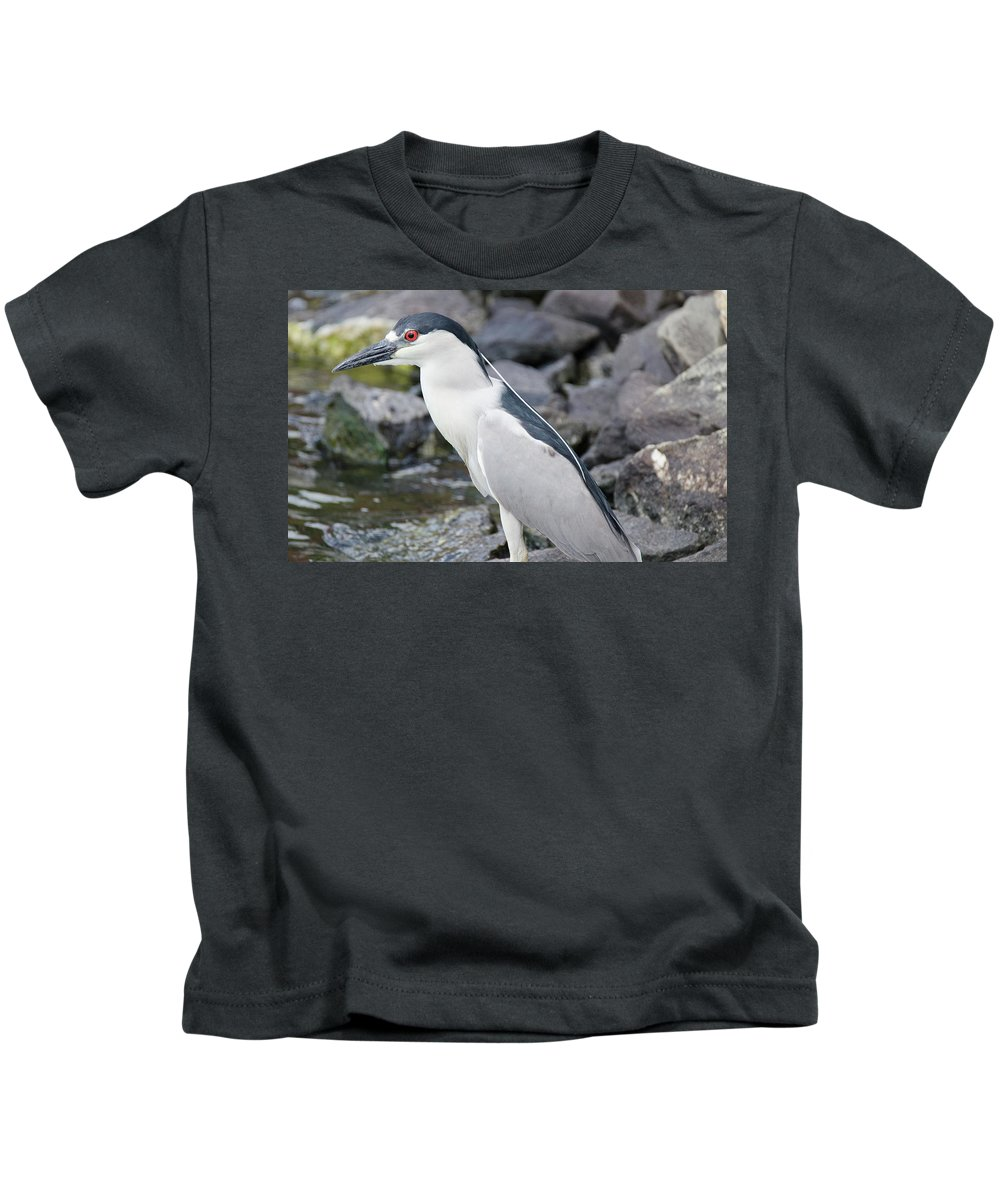 Heron Kids T-Shirt featuring the photograph Black Crowned Night Heron by Judd Nathan