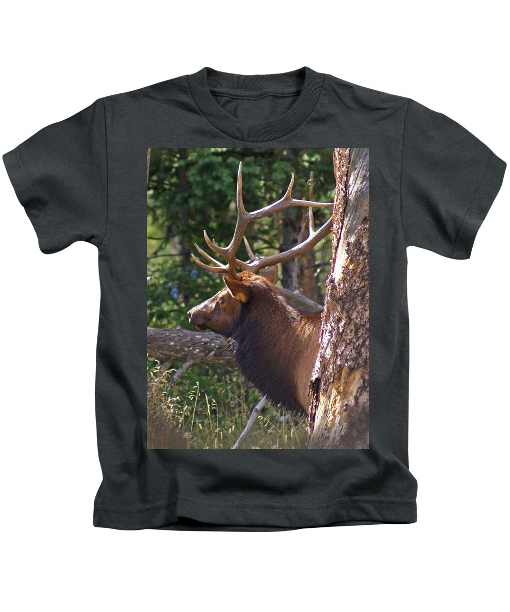 Elk Kids T-Shirt featuring the photograph Bull Elk 2 by Heather Coen