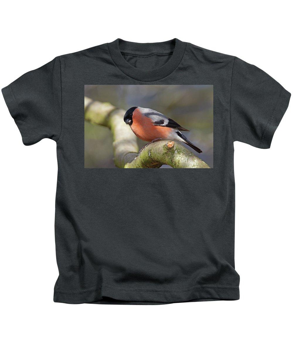 Birds Kids T-Shirt featuring the photograph Bullfinch by Bob Kemp