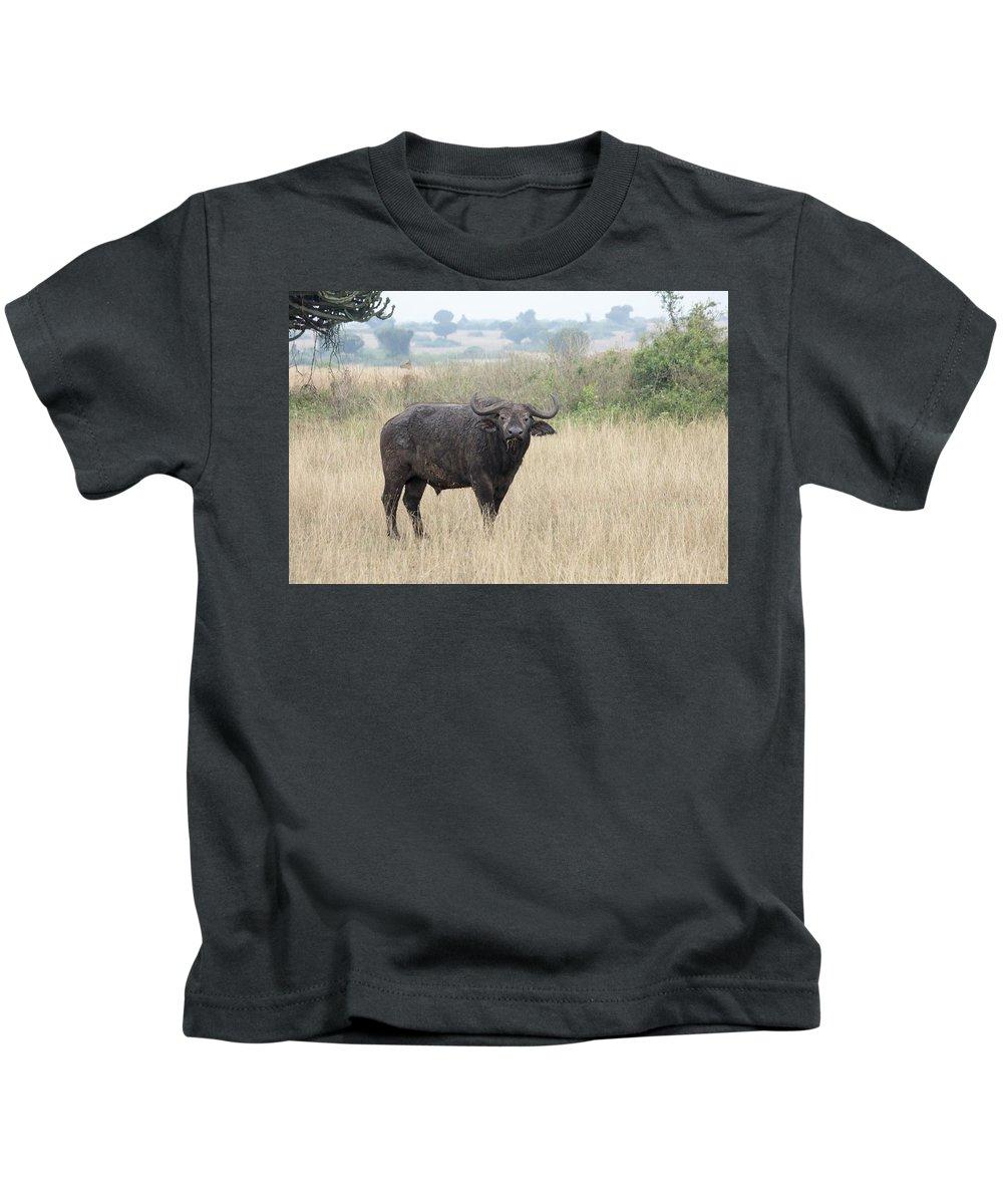 Africa Kids T-Shirt featuring the photograph Cape Buffalo Eating Grass In Queen Elizabeth National Park, Ugan by Karen Foley