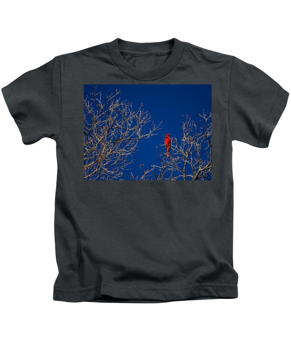 Cardinal Kids T-Shirt featuring the photograph Cardinal Against Blue Sky by Austin Photography