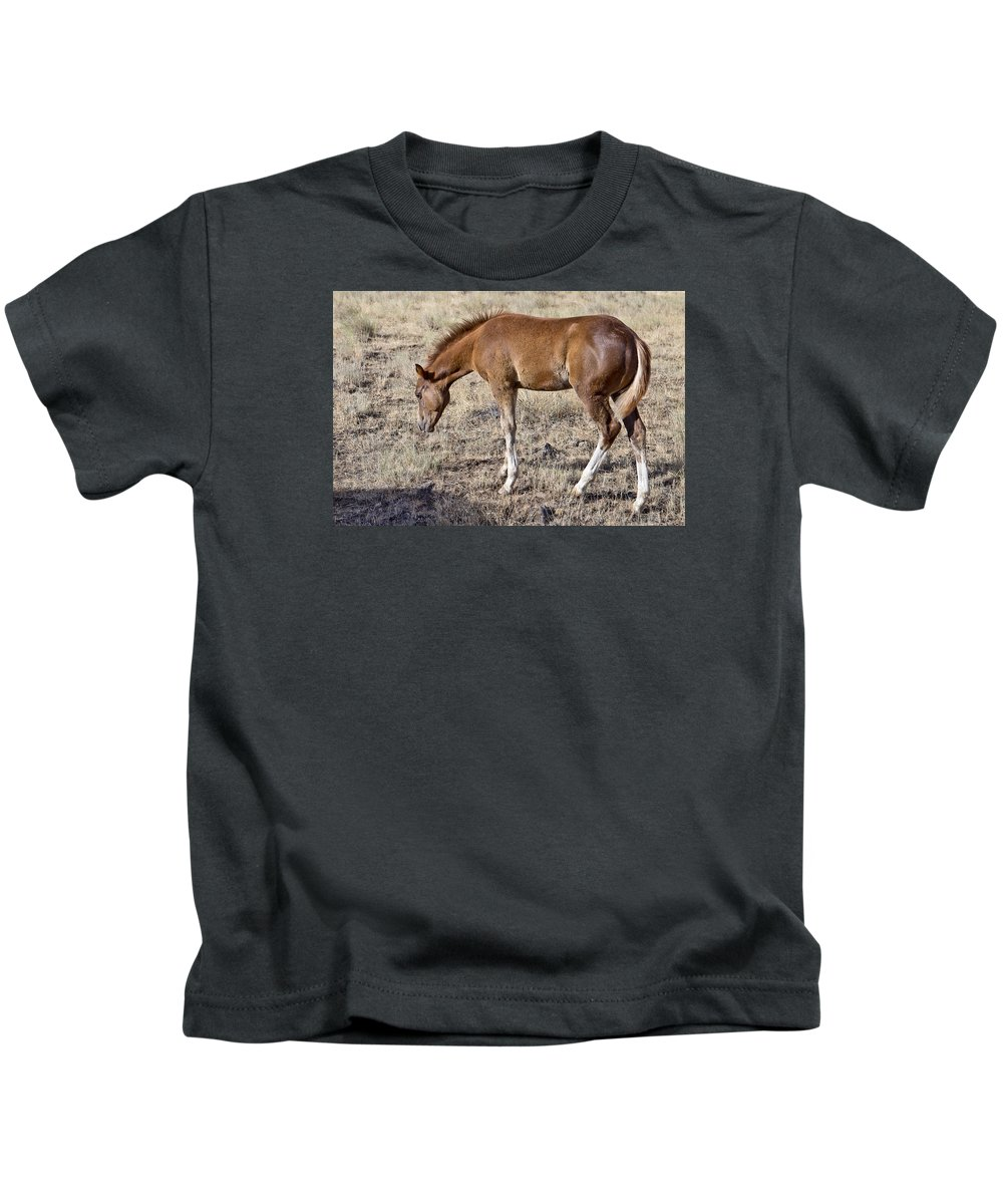 Joseph Kids T-Shirt featuring the photograph Colt 015 by Charles Frates