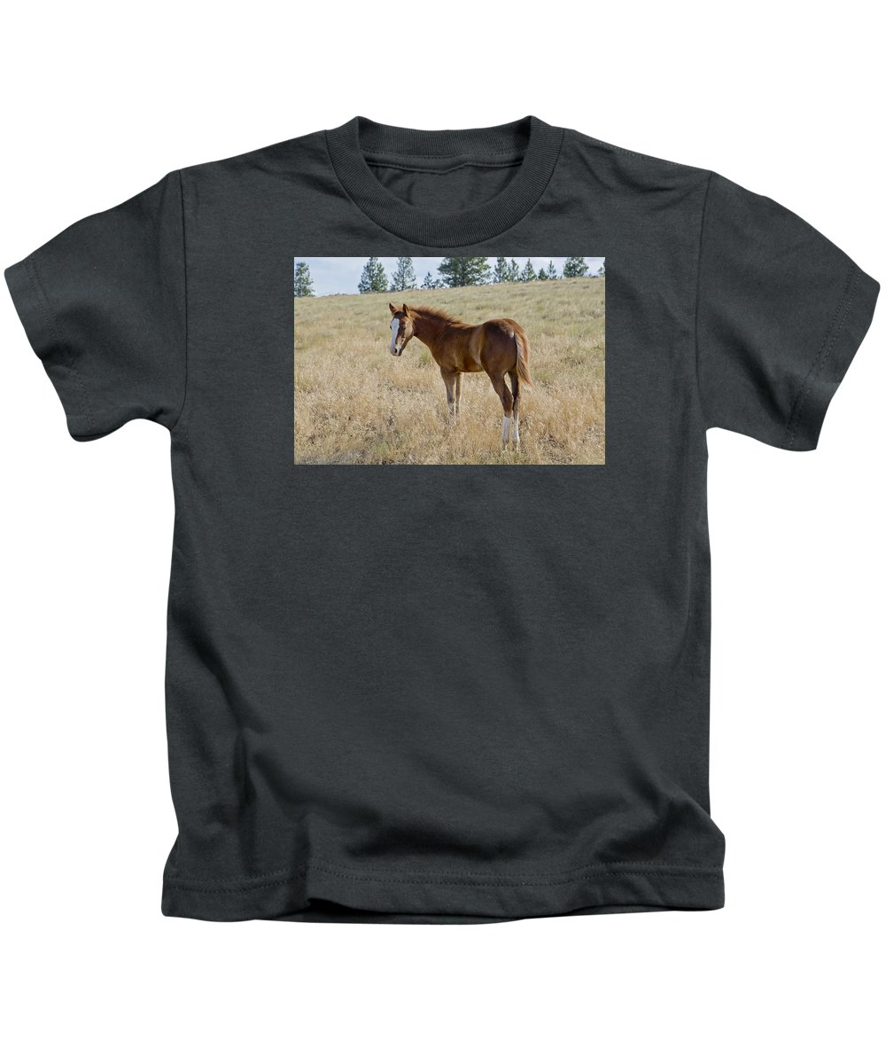 Joseph Kids T-Shirt featuring the photograph Colt 016 by Charles Frates