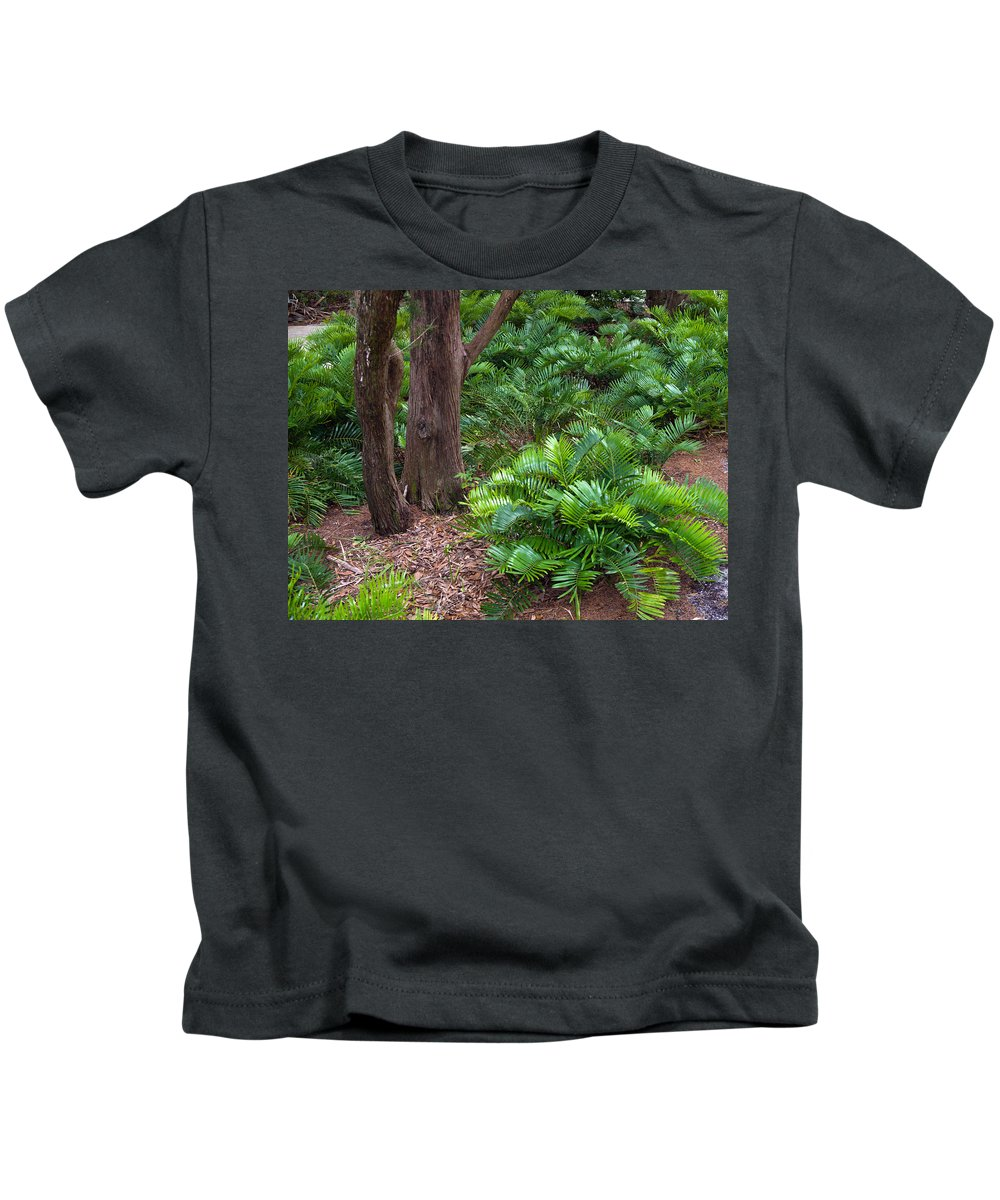 Florida; Coontie; Zamia; Integrifolia; Arrowroot; Indian; Bread; Breadroot; Plant; Rare; Wild; Prote Kids T-Shirt featuring the photograph Coontie Florida Arrowroot Or Indian Breadroot by Allan Hughes