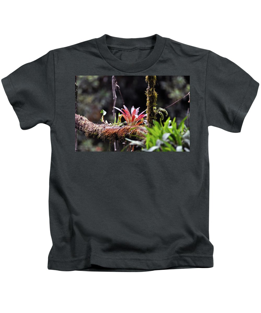 Epiphytic Kids T-Shirt featuring the photograph Epiphytic Plants by Wes Hanson
