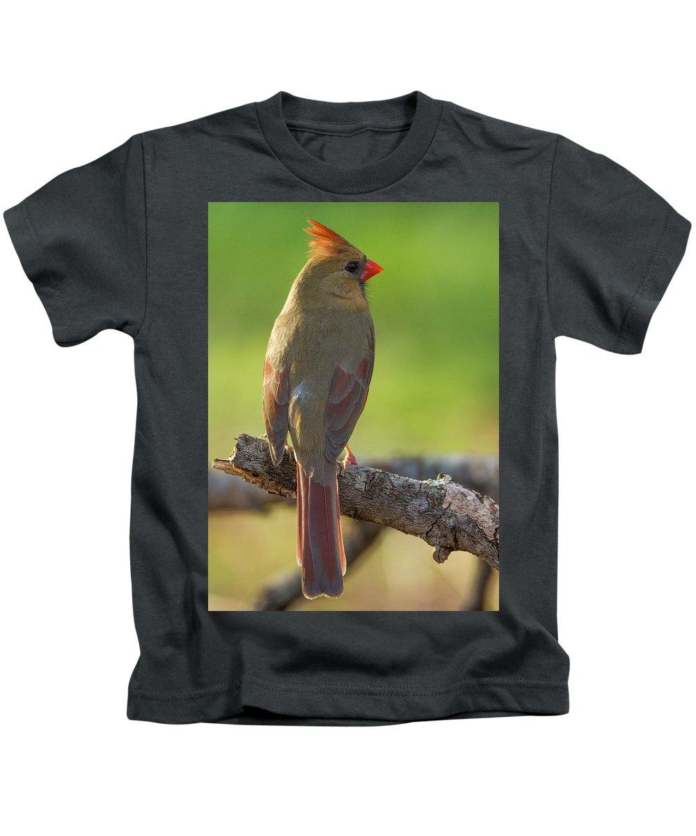 Birds Kids T-Shirt featuring the photograph Female Cardinal by David Waldrop