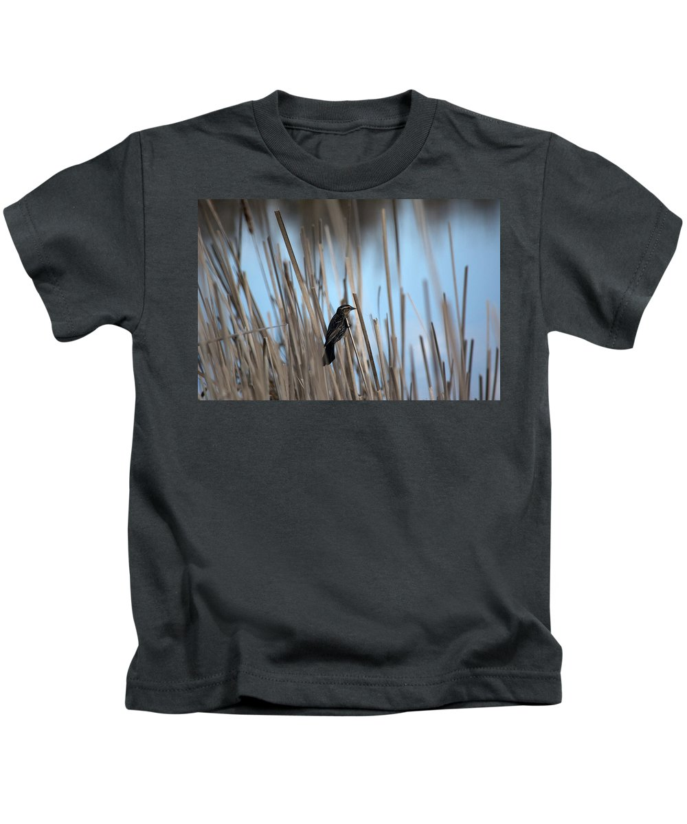 Red-winged Blackbird Kids T-Shirt featuring the photograph Female Redwing by Linda Kerkau