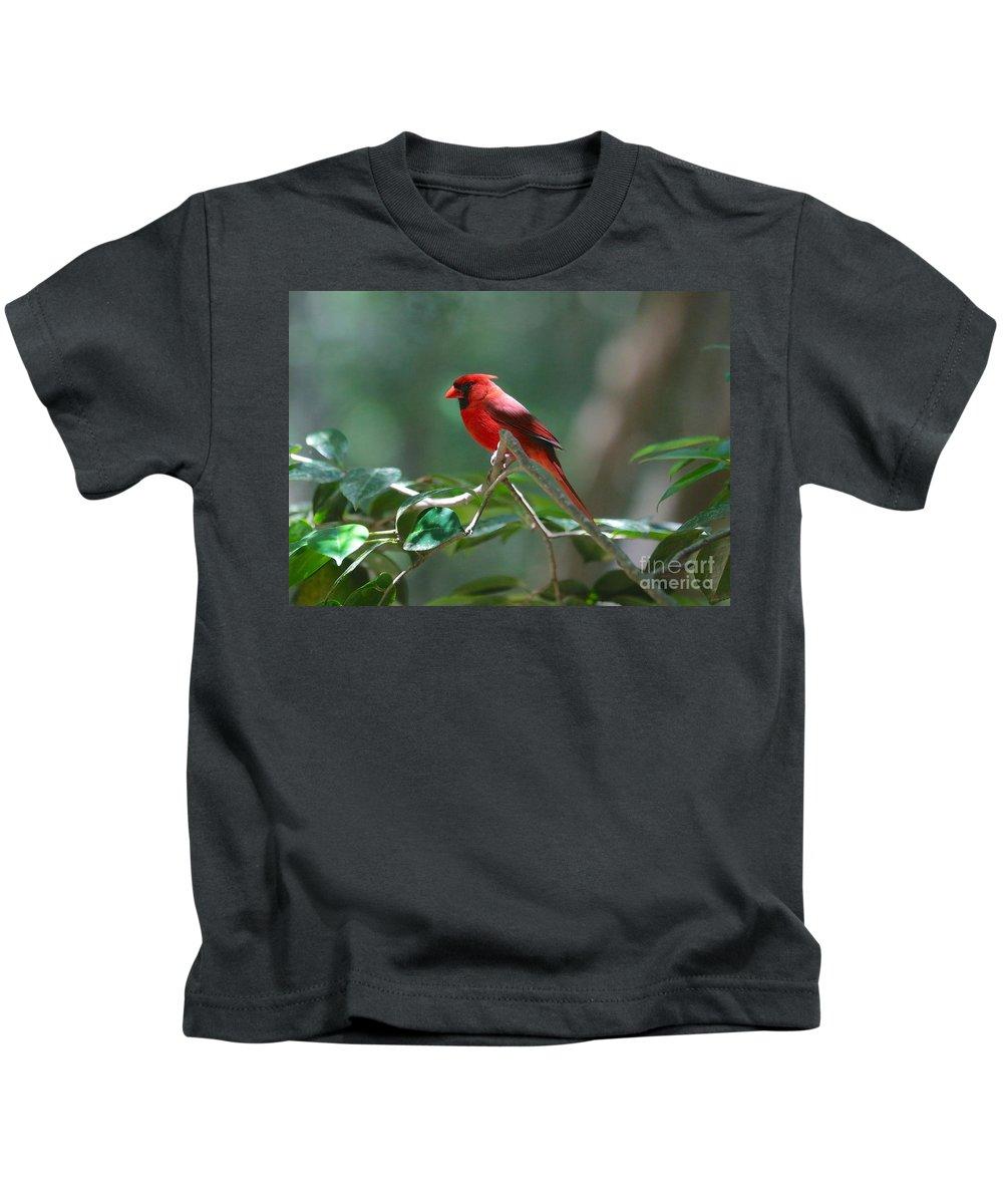 Cardinal Kids T-Shirt featuring the photograph Florida Cardinal by Carol Groenen