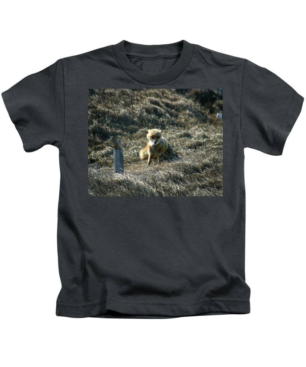 Red Fox Kids T-Shirt featuring the photograph Fox In The Wind by Anthony Jones