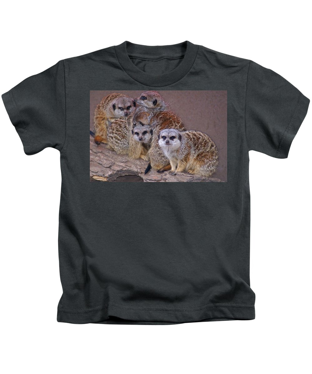 Mer Cats Kids T-Shirt featuring the photograph Freezing Meer Cats by Heather Coen