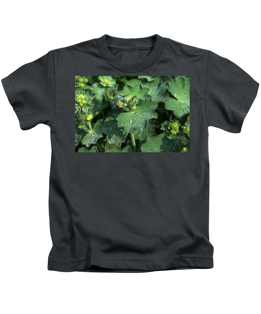 Geum Kids T-Shirt featuring the photograph Geum by Chris Day